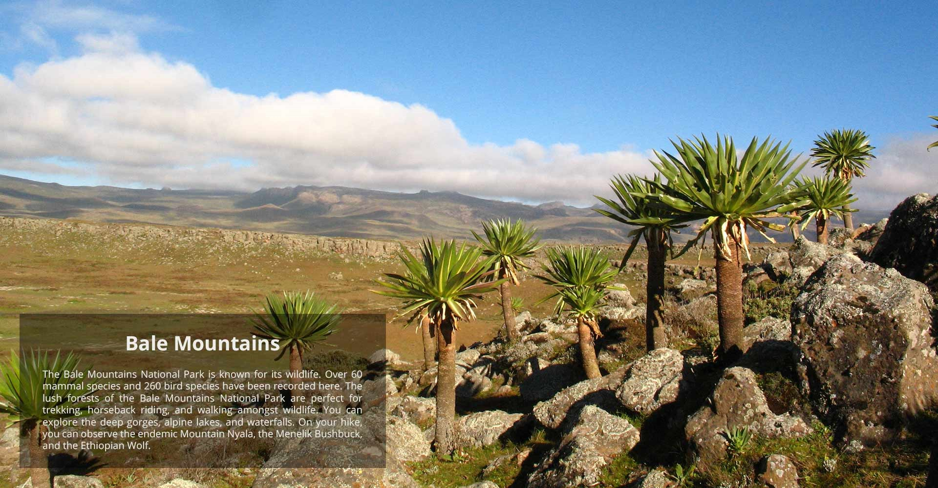 bale-mountains