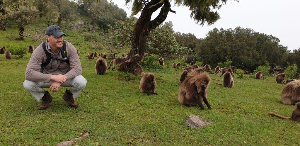 Gelada Monkeys in Simien Mountains Ethiopia